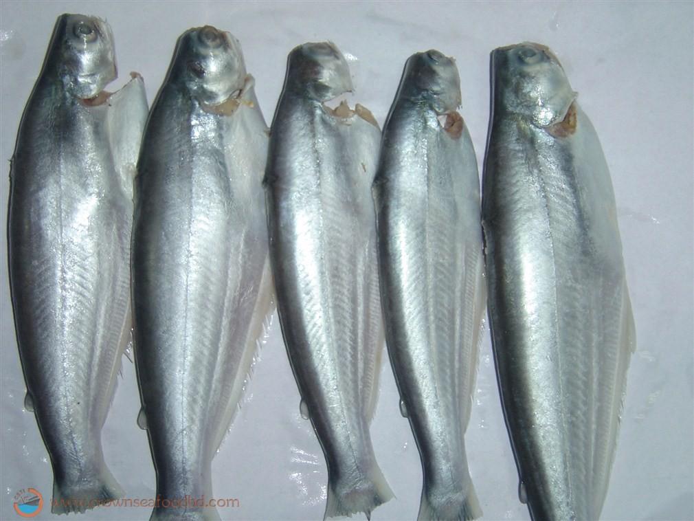 Crown seafood trading international ltd fresh water for Brackish water fish